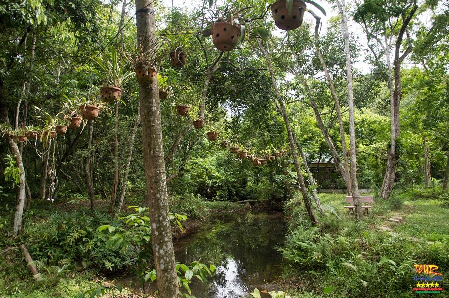 Vườn thực vật Phong Nha - Kẻ Bàng tour du lịch Quảng Bình 3